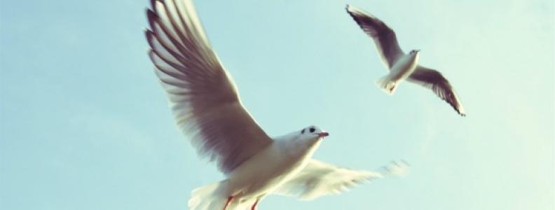 Flying Together An Artful Breath